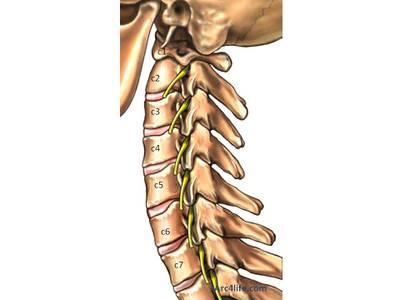 Cervical_spine_bones_2